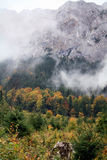 Autumn day at the mountain. Forest at the base of the Piatra Craiului mountains Royalty Free Stock Photos
