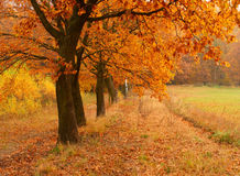 Autumn day in the park Royalty Free Stock Photo