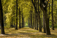 Autumn Day in Park Saski in Warsaw, Poland Royalty Free Stock Photography