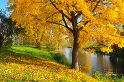 Autumn day in the park royalty free stock image