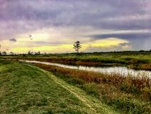 Stormy and hazy day in the swamps. Autumn day in the swamps of Florida Stock Images