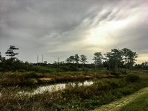Stormy and hazy day in the swamps. Autumn day in the swamps of Florida Stock Photography
