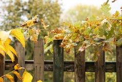 An autumn day Royalty Free Stock Photo