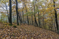 Autumn day in the woods Royalty Free Stock Photos