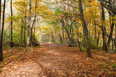 Autumn Day in Woods Stock Photography