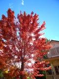 Autumn Days Arkivbild