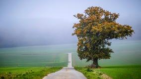 Autumn days Royalty Free Stock Photo