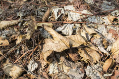 Autumn dead leaves Stock Image