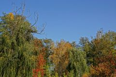 Bright colored tops of deciduous trees against the sky Stock Image