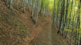 Autumn Deciduous Forest Beech Alley banque de vidéos