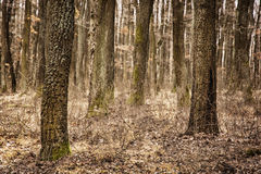 Autumn deciduous forest, brown filter, seasonal nature Royalty Free Stock Images