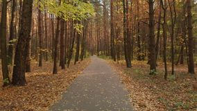 Asphalt path in the autumn deciduous forest stock footage