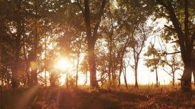 Autumn Deciduous Forest At Dawn o salida del sol imágenes de archivo libres de regalías