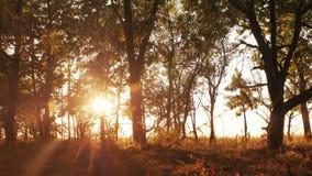 Autumn Deciduous Forest At Dawn o salida del sol imagen de archivo