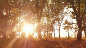 Autumn Deciduous Forest At Dawn ou lever de soleil photos stock