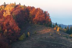 Autumn forest on the hill Royalty Free Stock Photos