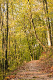 Autumn deciduous forest Royalty Free Stock Photos