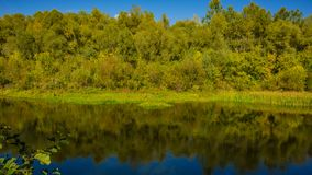 Autumn deciduous forest and river on a sunny day. Amazing landscape. Ukraine. Europe stock images