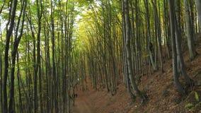 Autumn Deciduous Forest Two Men avec des sacs ? dos sont sur la tra?n?e banque de vidéos