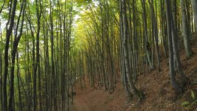 Autumn Deciduous Forest Two Men met Rugzakken is op de Sleep stock footage