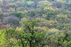 Autumn deciduous forest Stock Images