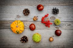 Autumn deco on wooden table. Royalty Free Stock Images