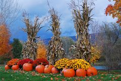 Free Autumn Decor On A Stormy Day Royalty Free Stock Photography - 118429267
