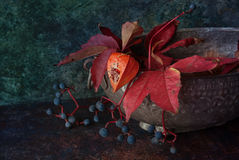 Autumn decor with physalis. And wild grape and leaf Stock Photo