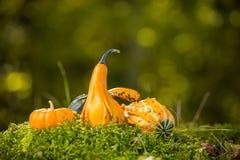 Autumn decor Royalty Free Stock Photography