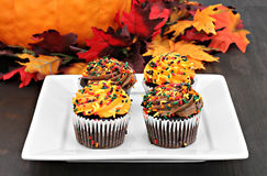 Autumn decorated chocolate cupcakes in a fall setting. Stock Images