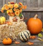 Autumn Decoratioms Stock Images