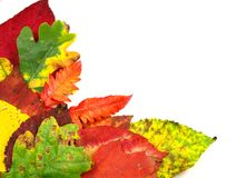 Autumn decoration Stock Images
