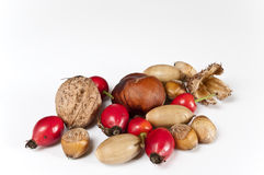 Autumn decoration. Several nuts, rose hips and oaks on white Royalty Free Stock Photo