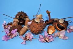 Autumn decoration. Image of some chestnuts and acorns with dead orchid flowers royalty free stock photo
