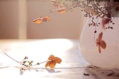 Autumn Decoration Royalty Free Stock Photo