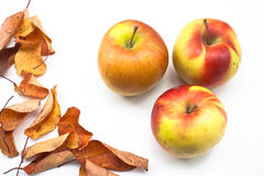 Autumn decoration with apples and leaves Royalty Free Stock Photography