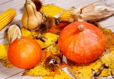 Autumn decoration arranged with natural elements such as colorfu Stock Photography