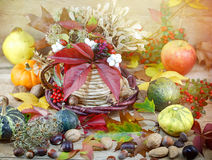 Autumn decoration - autumn harvest on table Royalty Free Stock Photo