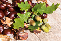 Autumn decoration - chestnuts and oaks Stock Photos