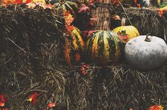 Decoration with colorful green and yellow pumpkins and hay Stock Photos