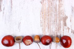 Autumn decoration and copy space for text on wooden background Stock Image