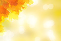 Autumn decoration corner made of leaves. With sunny blurred background Royalty Free Stock Image