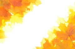 Autumn decoration corners made of leaves. With white background Stock Image
