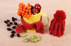 Autumn decoration with cup wrapped scarf and woolen cap on burlap Stock Photo