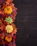 Autumn decoration. On  the dark wooden background Stock Photography
