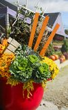 Autumn Decoration Flowers Pot. Beautiful Autumn Decoration Flowers Pot Stock Image