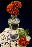 Autumn decoration Stock Photography