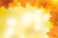Autumn decoration frame made of leaves. With sunny background Royalty Free Stock Image
