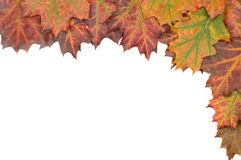 Autumn decoration frame made of leaves. With white background Stock Image