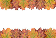 Autumn decoration frame made of leaves. With white background Stock Photography
